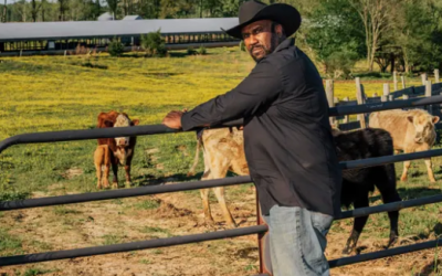There were nearly a million black farmers in 1920. Why have they disappeared?